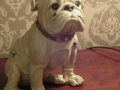 Antique White Sitting Bulldog Figure