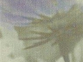 Anemone 04 Voilet Printed Linen