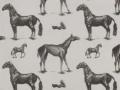 Horses Description