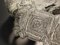 Dedar Precious Trimmings Braid in Antique Gold
